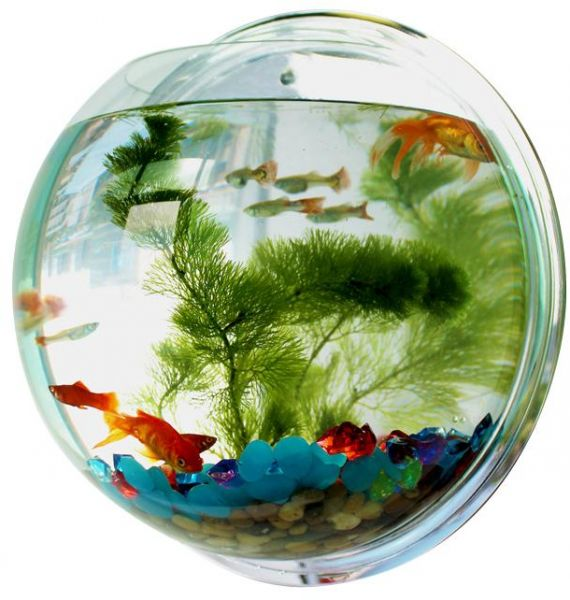 How To Decorate Fish Bowl: 24cm Wall Hanger Organizer Acrylic Hanging Fish Bowl Home